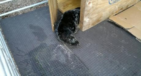 32246_Seal-Pup