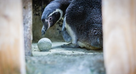 penguin 800x450