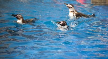 penguins 800x450