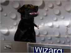 32265_wizard-of-paws