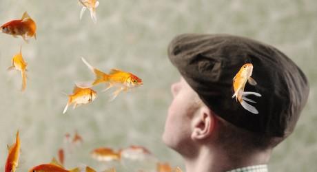 Goldfish publicity picture