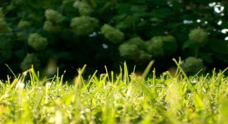 grass (800 x 450)