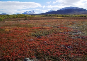 34182_Arctic-tundra-picture-credit-Martin-Sommerkorn