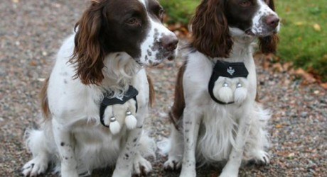 With springer spaniels Hector and Toby around, Craigend B&B welcome guests with canine companions
