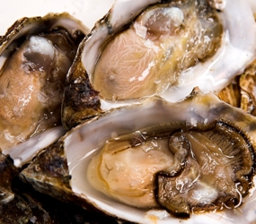 32679_Oysters-Resize