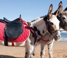 34263_Donkeys-Resize