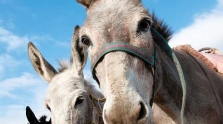 Avenue donkey rides allmedia
