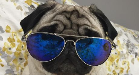 Gizmo Glasses 800 x 450
