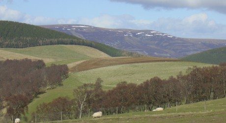 34418_12-07-CMS-research_Scottish-land_Sunny-hillside-with-sheep